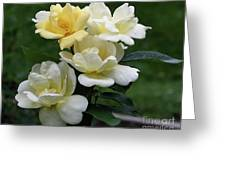 Oh So Pretty Roses Greeting Card
