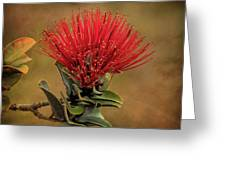Ohia Lehua Flower Volcanos National Park Greeting Card