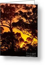 Ohia Trees At Sunset Greeting Card