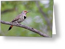 Oil Painted Northern Flicker Greeting Card
