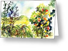 Ojai Oranges Greeting Card