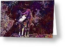 Okapi Okapia Mondonga Mammals  Greeting Card