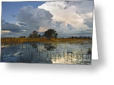 Okavango Delta Evening Greeting Card