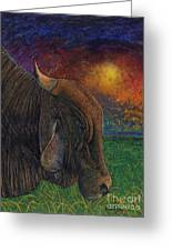 Okeechobee Brahman Greeting Card