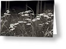 Oklahoma Prairie Flowers Greeting Card