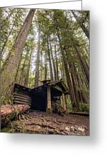 Old Abandoned Cabin In The Woods Greeting Card