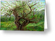 Old Apple Tree Greeting Card