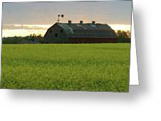 Old Barn In Canola Field Greeting Card