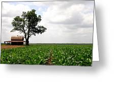 Old Barn In Sugar Cane Field Greeting Card