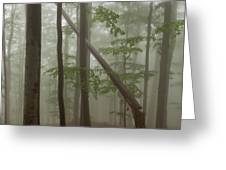 Old Beech Forest Greeting Card