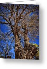 Old Cottonwood Greeting Card