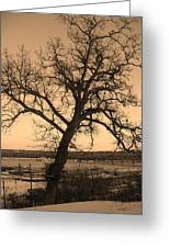 Old Crooked Tree Overlooking Mississippi River Greeting Card