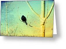 Old Crow Medicine Show Greeting Card
