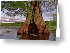 Old Cypress Trunk Greeting Card