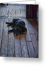 Old Dog Old Floor Greeting Card