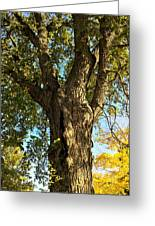 Old Elm Trunk In The Park Greeting Card
