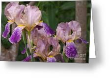 Old-fashioned Iris Greeting Card