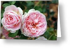 Old Fashioned Rose Greeting Card