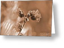 Old Fashioned Wild Flowers  Greeting Card