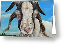 Old Goat - Painting By Cindy Chinn Greeting Card