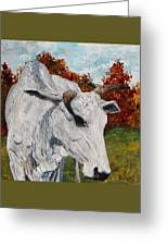 Old Grey Cow Greeting Card