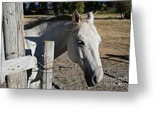 Old Grey Mare Greeting Card