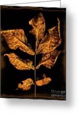 Old Hickory Leaf Greeting Card