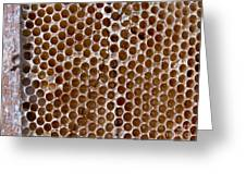 Old Honey Comb Bee Hive  Greeting Card
