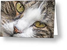 Old Kitty Greeting Card