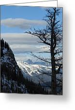 Old Larch Tree Has Best View Greeting Card