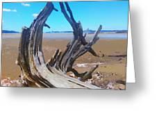 Old Log On Auckland Beach Greeting Card