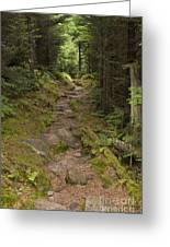 Old Mitchell Trail In Spruce-fir Forest Greeting Card