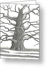 Old Oak 2 Greeting Card