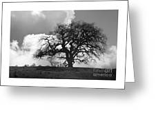 Old Oak Against Cloudy Sky Greeting Card
