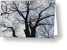 Old Oak Overcast Greeting Card