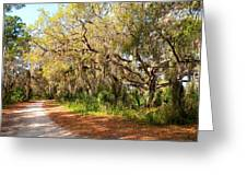Old Oak Trees And Moss Greeting Card