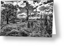 Old Oaks Bw.  Greeting Card