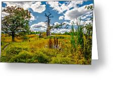 Old Oaks Greeting Card