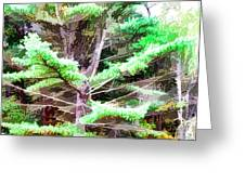 Old Pine Tree Greeting Card