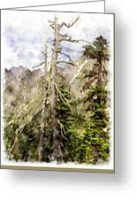 Old Pines Cascades Wc Greeting Card