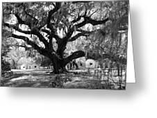 Old Plantation Tree Greeting Card
