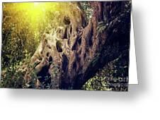 Old Sacred Olive Tree  Greeting Card