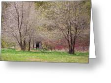 Old Shack In The Woods Greeting Card