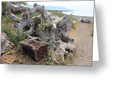 Old Stump At Gold Beach Oregon 5 Greeting Card
