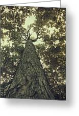 Old Sugar Maple Tree Greeting Card