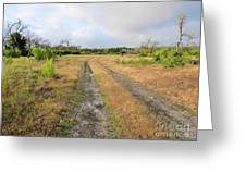 Old Texas Roads Greeting Card