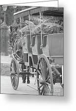 Old Time Horse And Buggy Greeting Card