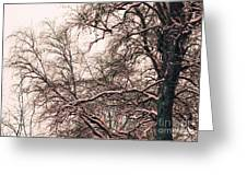 Old Tree 2 Greeting Card