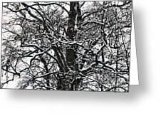 Old Tree 5 Greeting Card
