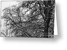 Old Tree 6 Greeting Card